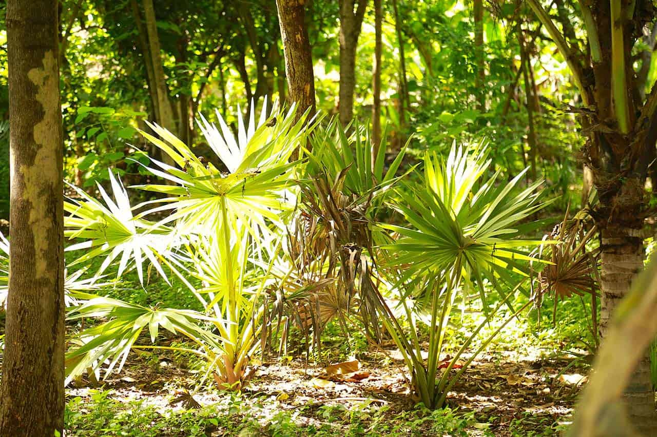 Entorno-tropical-bosque